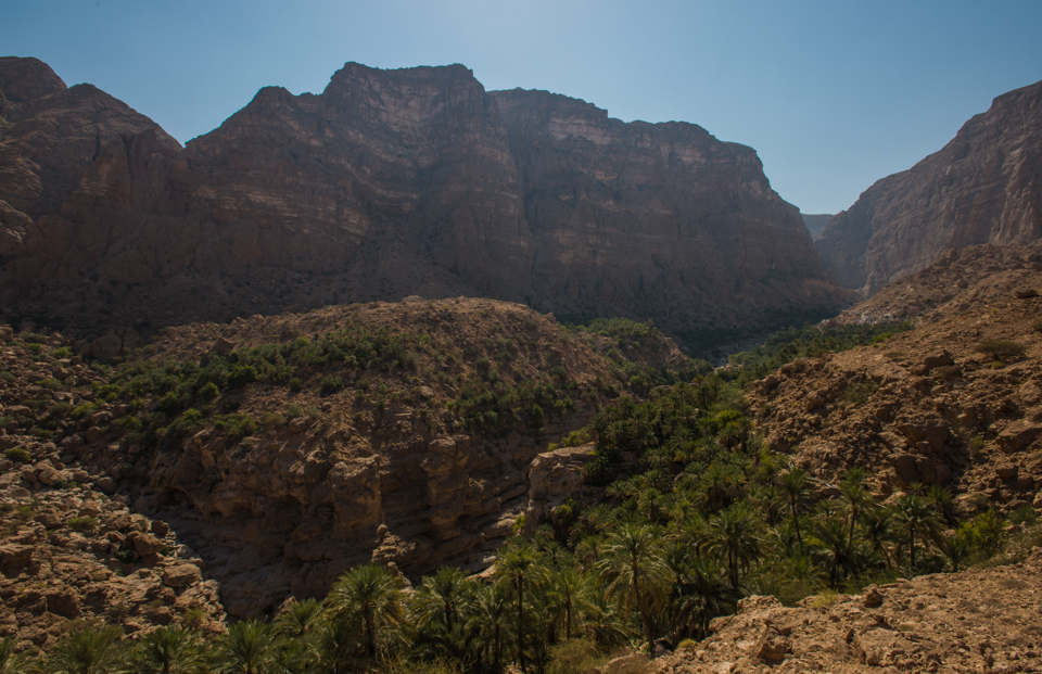 Plantations in Wadi Tiwi
